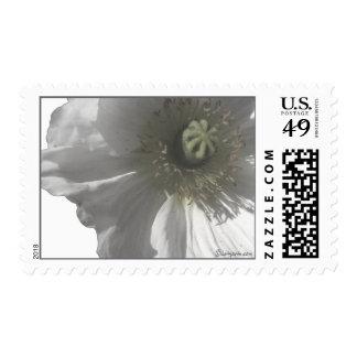 Iceland Poppy Wedding Postage Stamps Postage Stamp