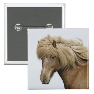 Iceland. Portrait of an Icelandic horse. Button