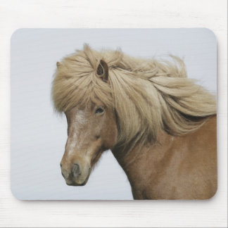 Iceland. Portrait of an Icelandic horse. Mouse Pad