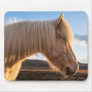 Iceland. Portrait Of Icelandic Horse Mouse Pad