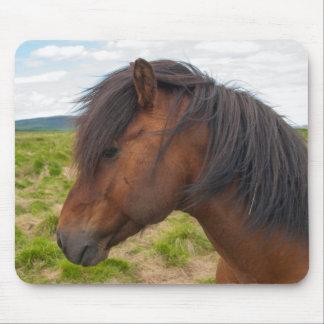 Iceland. South Region. Selfoss. Icelandic horse 1 Mouse Pad