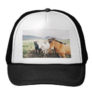 Iceland  three color horses trucker hat