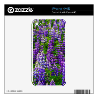 Iceland. Vik i Myrdal. Field of Lupines Decal For The iPhone 4