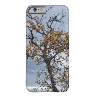Icelandic Birch iPhone 6 Case