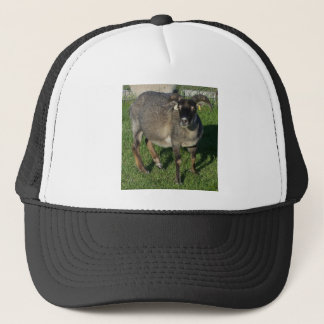 Icelandic Ewe Sheep Trucker Hat