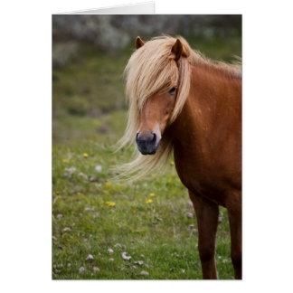 Icelandic Foal Card