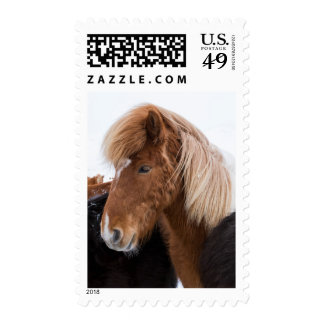 Icelandic Horse Among the Herd Postage
