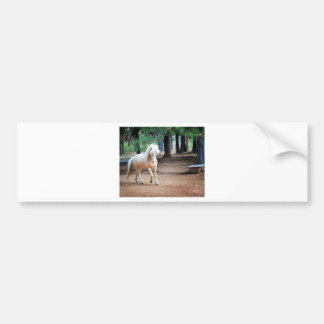 Icelandic Horse Bumper Sticker