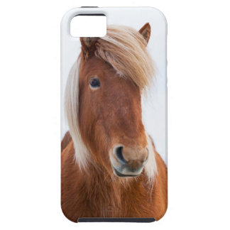 Icelandic Horse during winter  2 iPhone SE/5/5s Case