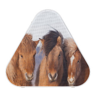 Icelandic Horse during winter Bluetooth Speaker