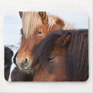 Icelandic Horse during winter on Iceland 3 Mouse Pad