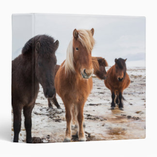 Icelandic Horse during winter on Iceland 3 Ring Binders
