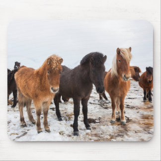 Icelandic Horse during winter on Iceland Mouse Pad
