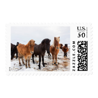 Icelandic Horse during winter on Iceland Postage