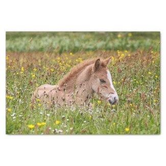 "Icelandic Horse Foal Tissue Paper 10"" X 15"" Tissue Paper"