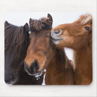 Icelandic Horse friends, Iceland Mouse Pad
