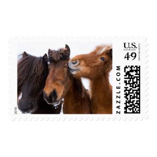 Icelandic Horse friends, Iceland Postage