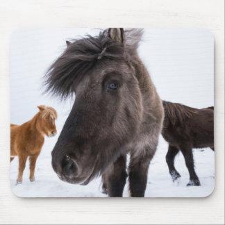 Icelandic Horse portrait, Iceland Mouse Pad