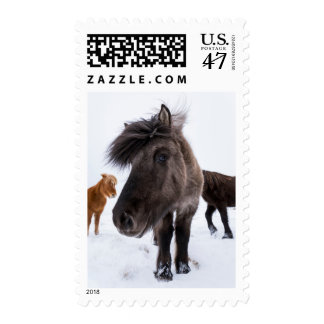 Icelandic Horse portrait, Iceland Postage