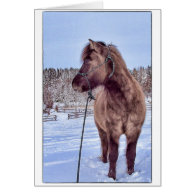 Icelandic Horse Power Card