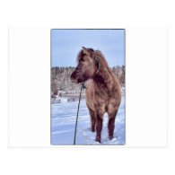 Icelandic Horse Power Post Card