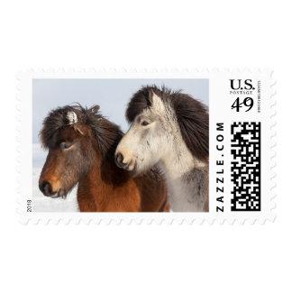 Icelandic Horse profile, Iceland Postage