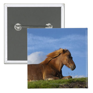 Icelandic horse resting and sky 2 inch square button