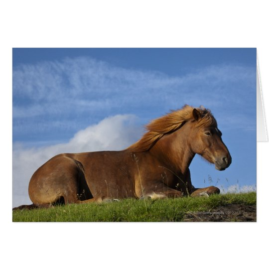 Icelandic horse resting and sky card
