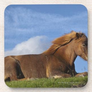 Icelandic horse resting and sky beverage coaster