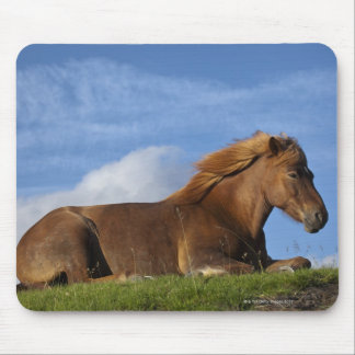 Icelandic horse resting and sky mouse pad