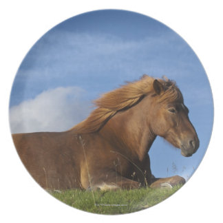 Icelandic horse resting and sky plate
