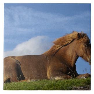 Icelandic horse resting and sky tile
