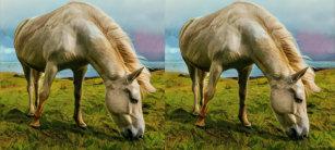 Icelandic Horse Coffee & Travel Mugs | Zazzle