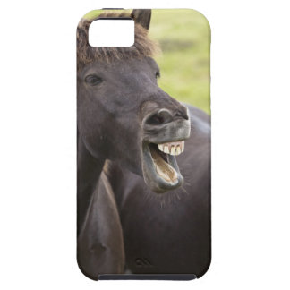 Icelandic horse with funny expression iPhone SE/5/5s case
