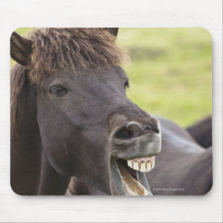 Icelandic horse with funny expression mouse pad