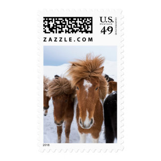 Icelandic Horse with Star Postage