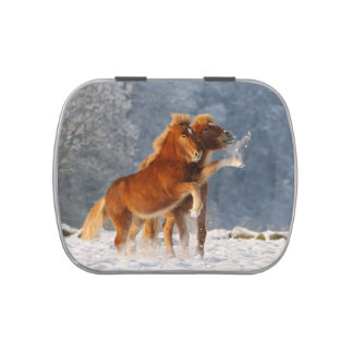 Icelandic horses foal playing in snow jelly belly candy tin