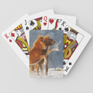 Icelandic horses foal playing in snow playing cards