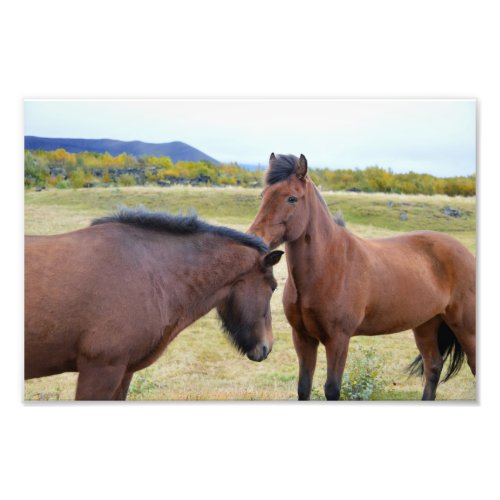 Icelandic Horses Greet Each Other Photo Print