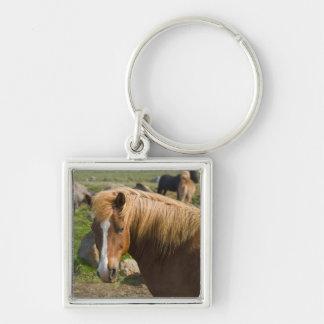 Icelandic Horses in northeastern Iceland. Keychain