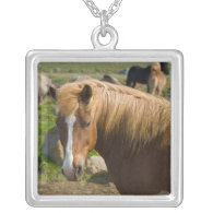 Icelandic Horses in northeastern Iceland. Necklaces