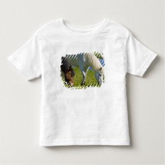 Icelandic Horses in western Iceland. Toddler T-shirt