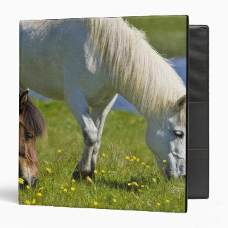 Icelandic Horses in western Iceland. Vinyl Binders