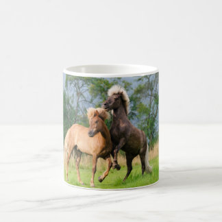 Icelandic Horses Playing and Rearing, Photo Cup