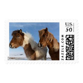 Icelandic horses postage