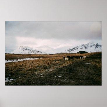 Art Themed Icelandic Horses Poster