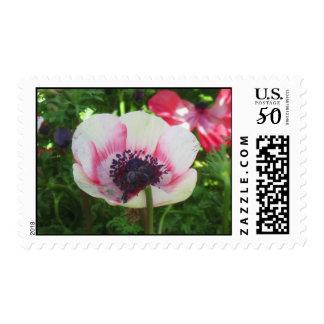 Icelandic poppy postage