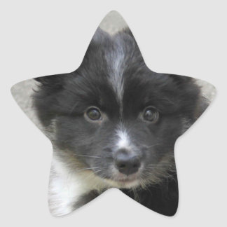 Icelandic Sheepdog 2014-0802 Star Sticker