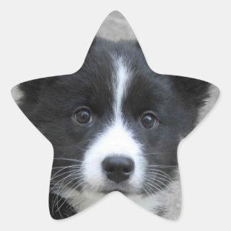 Icelandic Sheepdog 2014-0804 Star Sticker