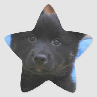 Icelandic Sheepdog 2014-0805 Star Sticker